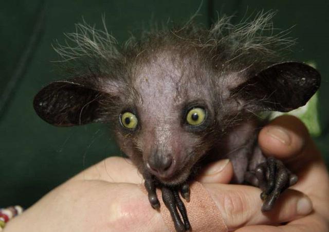 Chùm ảnh: Bất ngờ với những loài động vật kỳ dị nhất hành tinh - Ảnh 2.