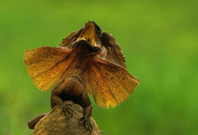 Chùm ảnh: Bất ngờ với những loài động vật kỳ dị nhất hành tinh - Ảnh 11.