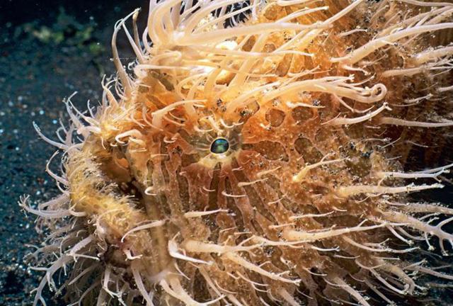 Chùm ảnh: Bất ngờ với những loài động vật kỳ dị nhất hành tinh - Ảnh 13.