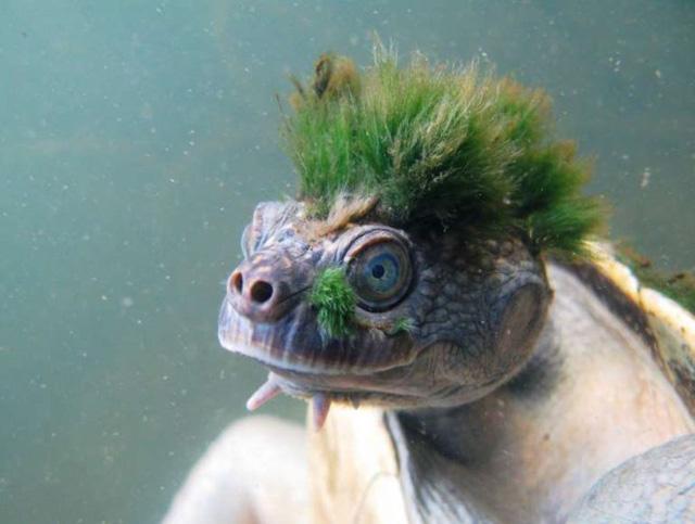 Chùm ảnh: Bất ngờ với những loài động vật kỳ dị nhất hành tinh - Ảnh 15.