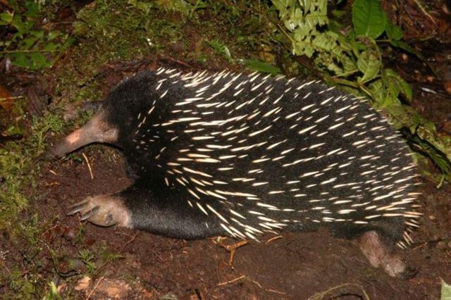 Chùm ảnh: Bất ngờ với những loài động vật kỳ dị nhất hành tinh - Ảnh 4.