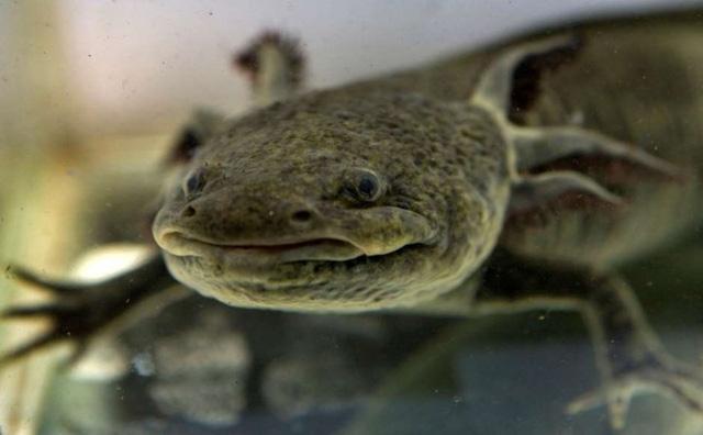 Chùm ảnh: Bất ngờ với những loài động vật kỳ dị nhất hành tinh - Ảnh 6.