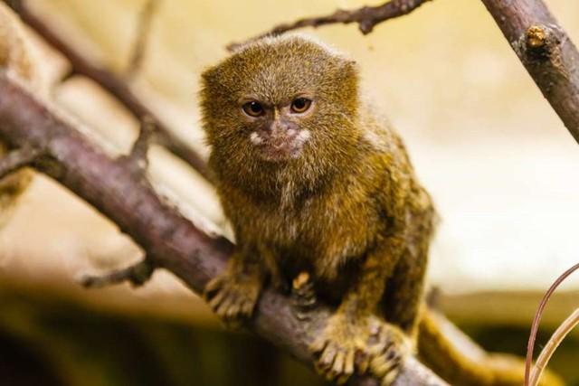Chùm ảnh: Bất ngờ với những loài động vật kỳ dị nhất hành tinh - Ảnh 9.