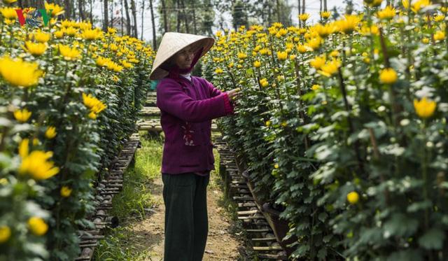 Buổi sáng ở làng hoa truyền thống xứ Huế - Ảnh 1.