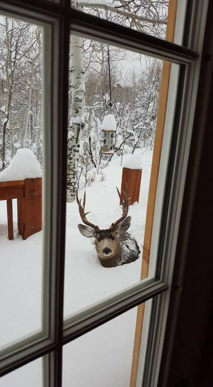 Những bức ảnh về mùa đông giá rét nhìn thôi đã thấy tê người - ảnh 12