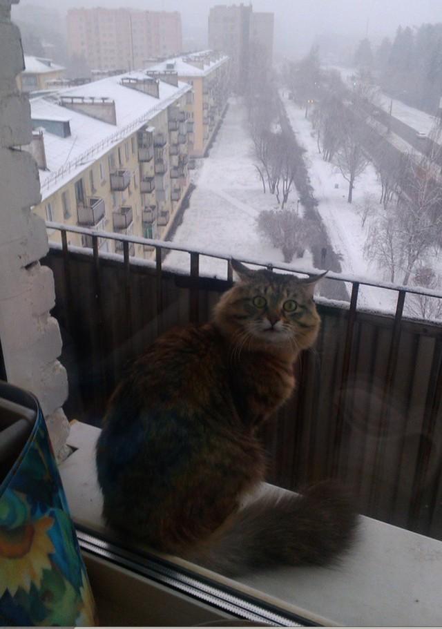 Những bức ảnh về mùa đông giá rét nhìn thôi đã thấy tê người - ảnh 8