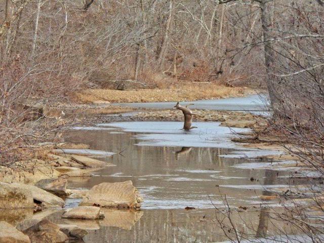 Những bức ảnh về mùa đông giá rét nhìn thôi đã thấy tê người - ảnh 1