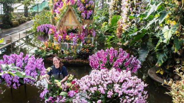 Lễ hội hoa lan Thái ở London, Anh - Điểm đến thú vị đầu tháng 3/2018 - Ảnh 1.