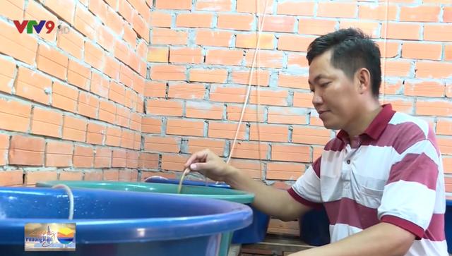 Bỏ chức giám đốc ở công ty nước ngoài, thanh niên Vĩnh Long về vườn nuôi lươn - Ảnh 1.