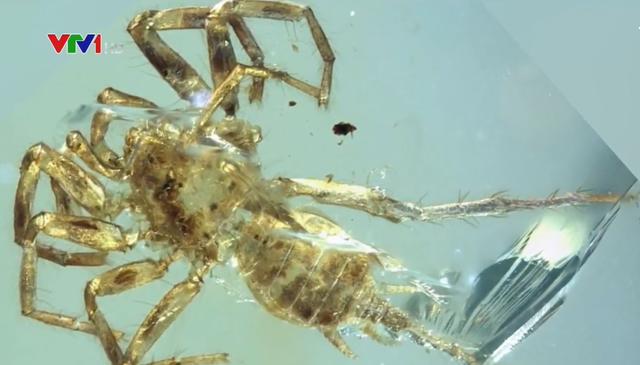 Phát hiện loài nhện có đuôi cách đây 100 triệu năm - ảnh 1