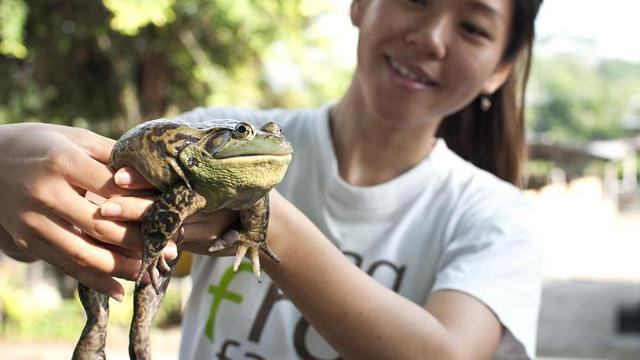 Ghé thăm trang trại ếch tại Singapore - Ảnh 1.