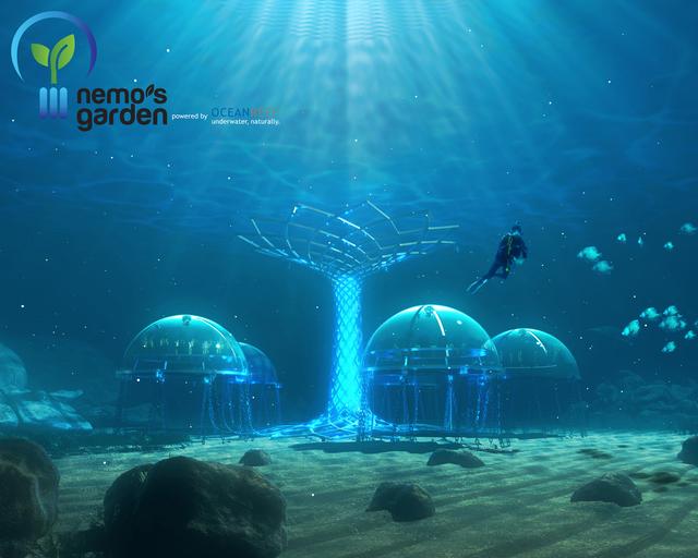 Dự án trồng rau dưới biển đối phó với biến đổi khí hậu - Ảnh 3.
