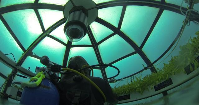 Dự án trồng rau dưới biển đối phó với biến đổi khí hậu - Ảnh 5.