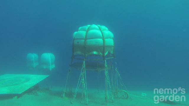 Dự án trồng rau dưới biển đối phó với biến đổi khí hậu - Ảnh 1.