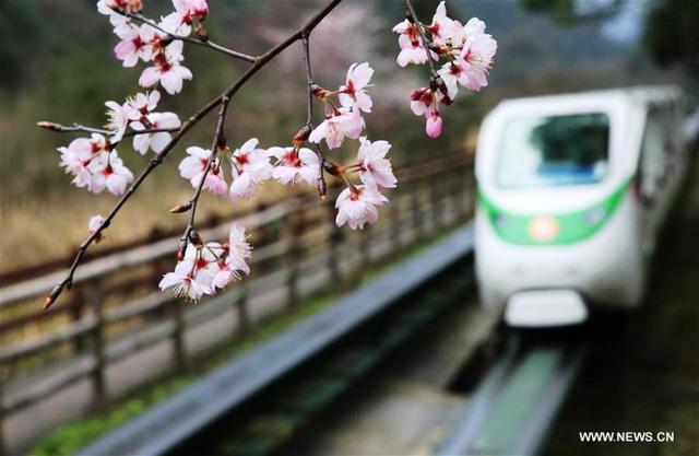 Mùa hoa nở Trung Quốc thu hút hàng ngàn khách du lịch - Ảnh 2.