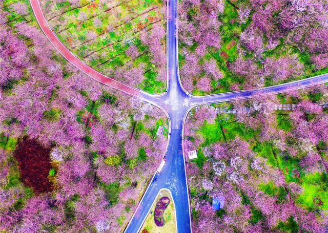 Mùa hoa nở Trung Quốc thu hút hàng ngàn khách du lịch - Ảnh 3.
