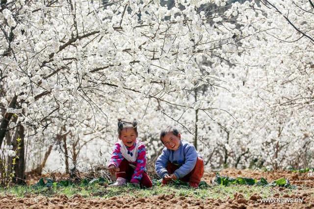 Mùa hoa nở Trung Quốc thu hút hàng ngàn khách du lịch - Ảnh 5.