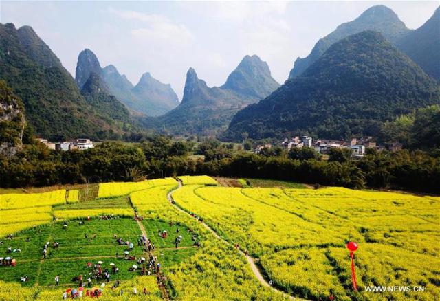 Mùa hoa nở Trung Quốc thu hút hàng ngàn khách du lịch - Ảnh 9.