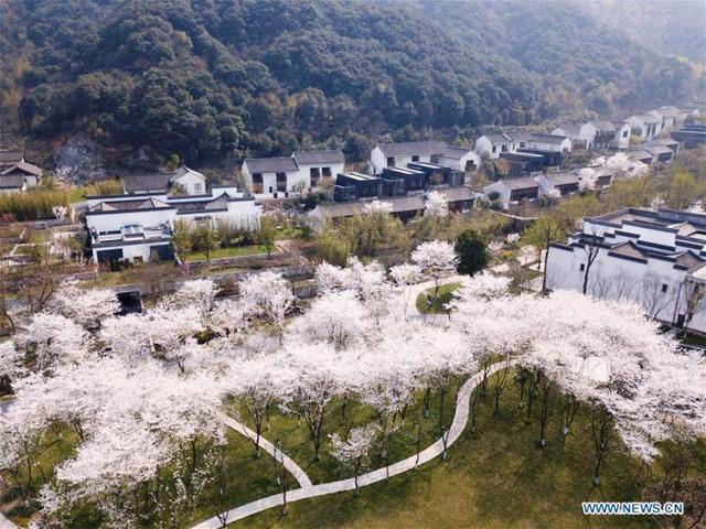Mùa hoa nở Trung Quốc thu hút hàng ngàn khách du lịch - Ảnh 11.