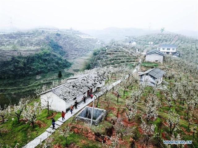 Mùa hoa nở Trung Quốc thu hút hàng ngàn khách du lịch - Ảnh 13.
