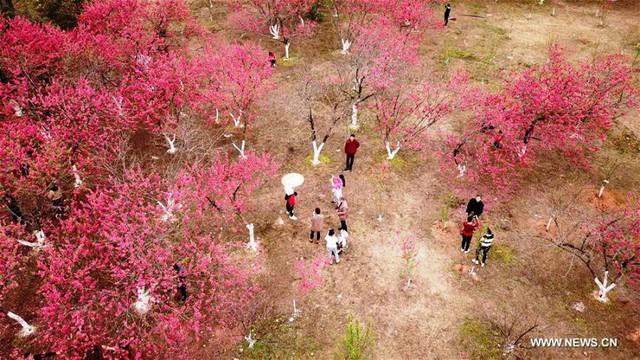 Mùa hoa nở Trung Quốc thu hút hàng ngàn khách du lịch - Ảnh 16.