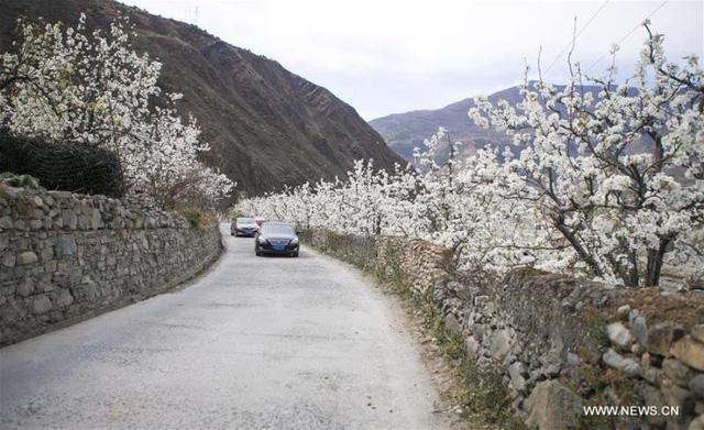 Mùa hoa nở Trung Quốc thu hút hàng ngàn khách du lịch - Ảnh 18.