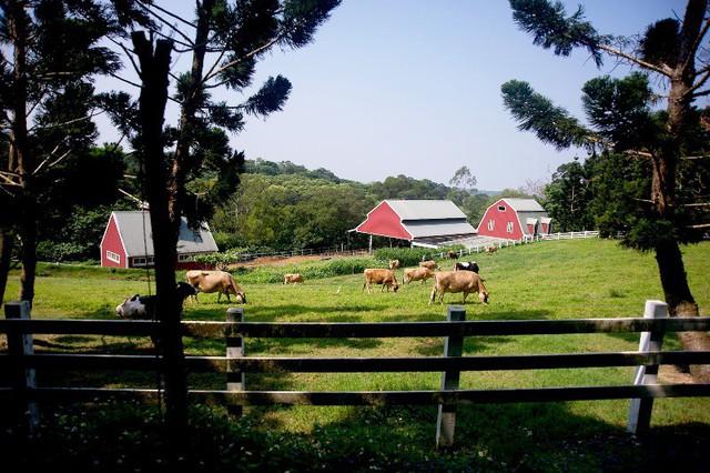 Độc đáo trang trại bò bay ở Đài Loan, Trung Quốc - Ảnh 3.