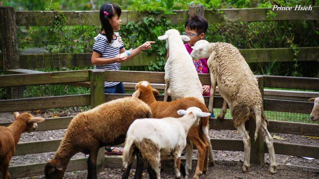 Độc đáo trang trại bò bay ở Đài Loan, Trung Quốc - Ảnh 4.