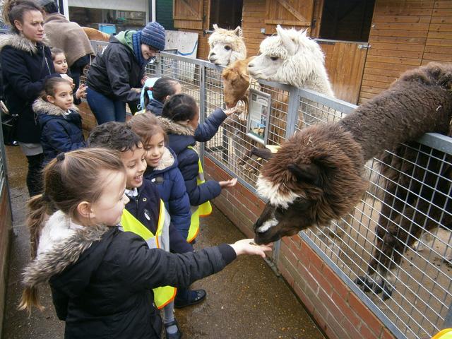 Trang trại thú nuôi vô cùng đáng yêu tại thành phố London - Ảnh 3.