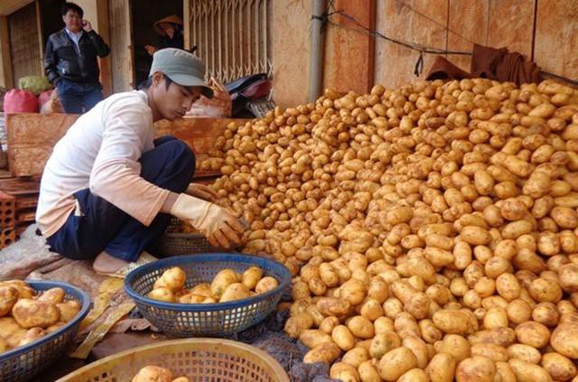 Lâm Đồng lên kế hoạch xây dựng thương hiệu khoai tây Đà Lạt - Ảnh 1.