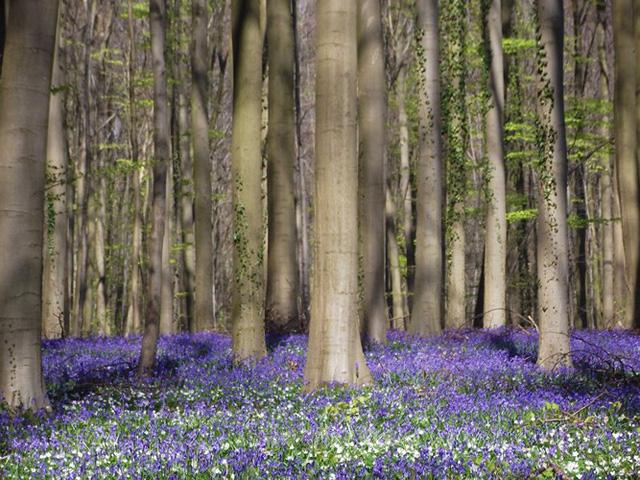 Ngắm cảnh đẹp như tranh vẽ tại Bỉ vào tháng 4 - Ảnh 14.