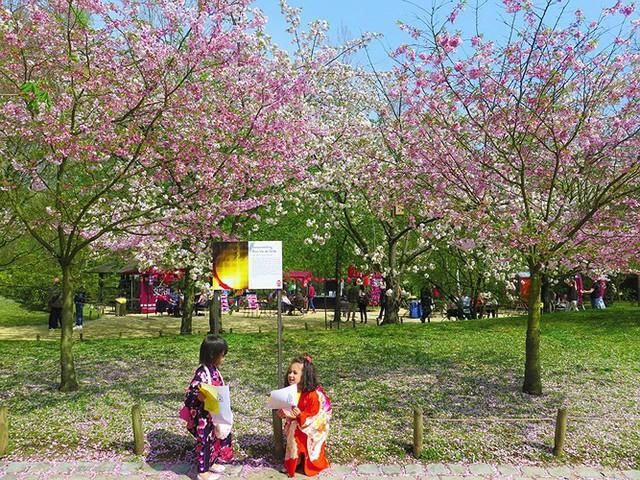Ngắm cảnh đẹp như tranh vẽ tại Bỉ vào tháng 4 - Ảnh 6.