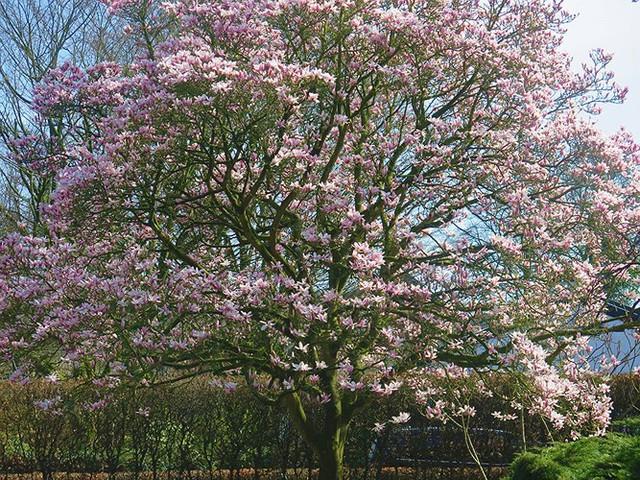 Ngắm cảnh đẹp như tranh vẽ tại Bỉ vào tháng 4 - Ảnh 8.