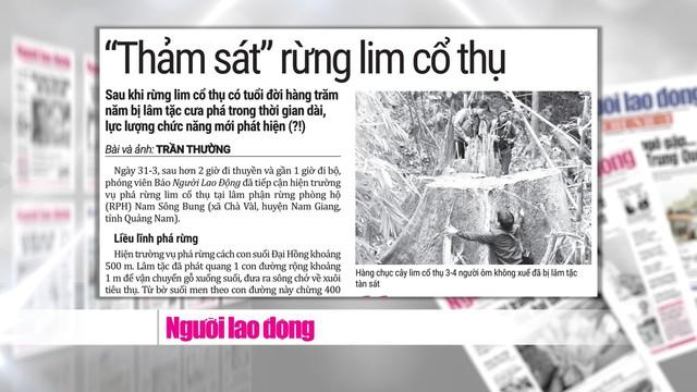 Rừng quý ở Quảng Nam lại bị tàn phá: Trách nhiệm của cơ quan chức năng ở đâu? - Ảnh 2.
