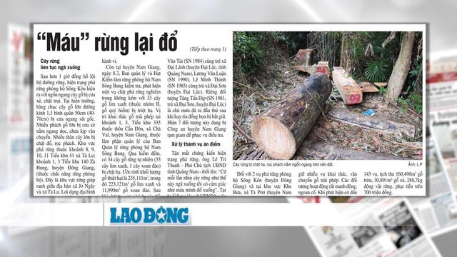 Rừng quý ở Quảng Nam lại bị tàn phá: Trách nhiệm của cơ quan chức năng ở đâu? - Ảnh 6.