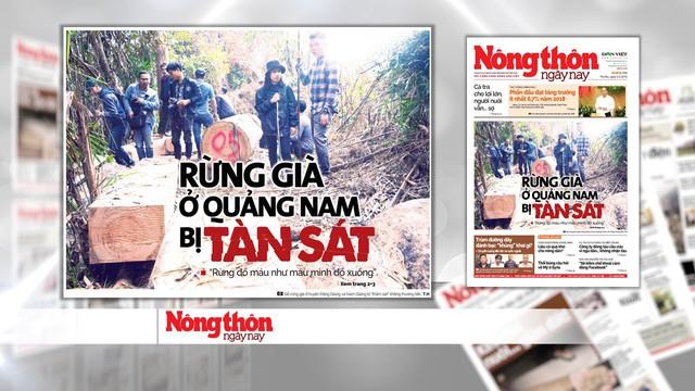 Rừng quý ở Quảng Nam lại bị tàn phá: Trách nhiệm của cơ quan chức năng ở đâu? - Ảnh 4.