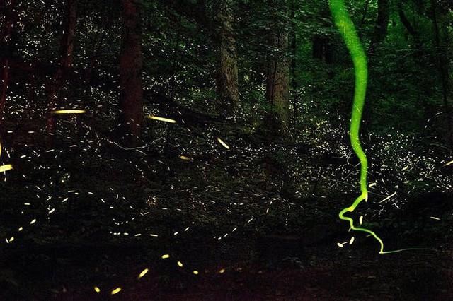Ngắm những hiện tượng thiên nhiên rực rỡ sắc màu trên thế giới - Ảnh 2.