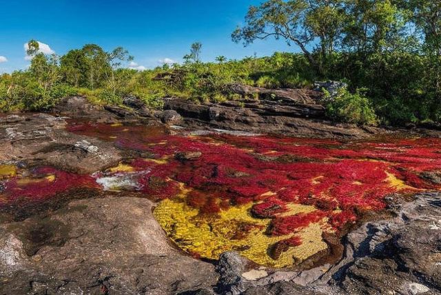 Ngắm những hiện tượng thiên nhiên rực rỡ sắc màu trên thế giới - Ảnh 3.