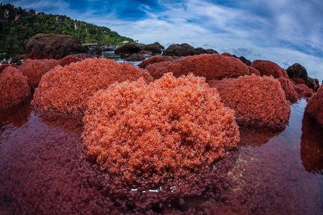 Ngắm những hiện tượng thiên nhiên rực rỡ sắc màu trên thế giới - Ảnh 4.