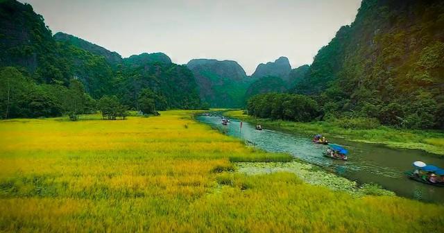 Nhanh chân đến Tam Cốc, Ninh Bình tháng 6 ngắm mùa lúa chín tuyệt đẹp - Ảnh 1.