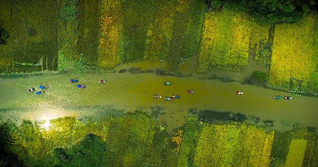 Nhanh chân đến Tam Cốc, Ninh Bình tháng 6 ngắm mùa lúa chín tuyệt đẹp - Ảnh 3.