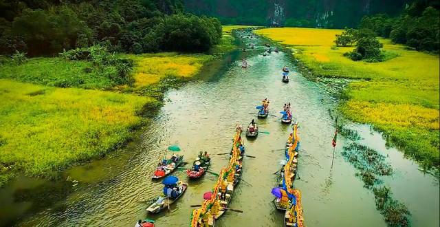 Nhanh chân đến Tam Cốc, Ninh Bình tháng 6 ngắm mùa lúa chín tuyệt đẹp - Ảnh 2.