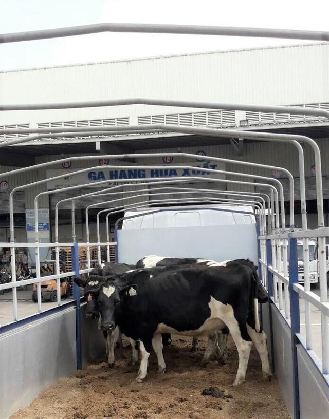Vinamilk nhập lô bò A2 thuần chủng đầu tiên từ New Zealand - Ảnh 2.