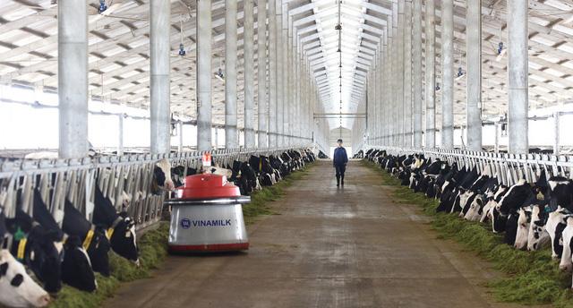 Vinamilk nhập lô bò A2 thuần chủng đầu tiên từ New Zealand - Ảnh 3.