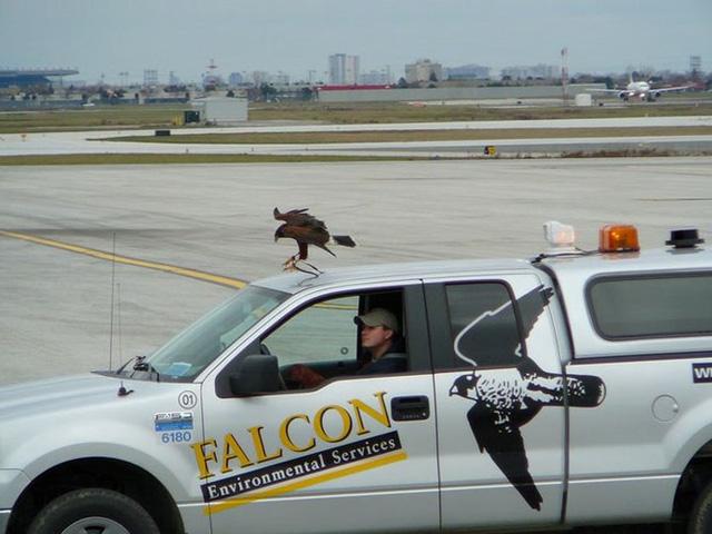 Những động vật thay người làm việc ở sân bay - Ảnh 1.
