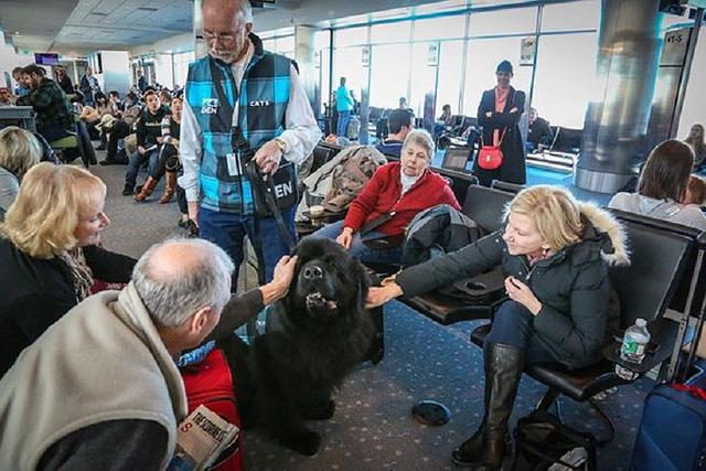 Những động vật thay người làm việc ở sân bay - Ảnh 2.