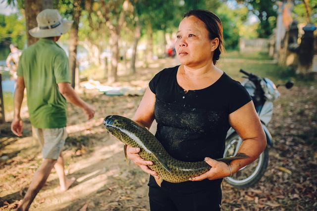 Thừa Thiên Huế: Cá lồng nuôi chết hàng loạt dọc sông Bồ - Ảnh 1.