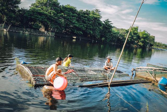 Thừa Thiên Huế: Cá lồng nuôi chết hàng loạt dọc sông Bồ - Ảnh 2.