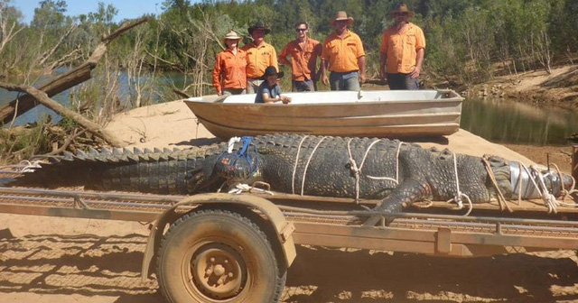 Australia: Bắt cá sấu khổng lồ nặng 600kg - Ảnh 2.