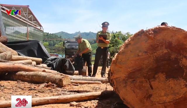 Phát hiện thêm 3 vụ phá rừng ở Bắc Quang, Hà Giang - ảnh 1